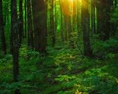 Nature Photography, Sun Light in Forest, Fine Art Print, Photo Card, Sun Rays, Woodland, Green Yellow, Fairy Land, Cabin Decor, Wisconsin