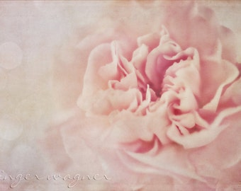Floral Photography - Pink Dreams - fine art print - 8x12 - romantic cottage chic soft pastel pink ivory dreamy flower bokeh home decor