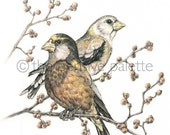 Watercolored Birds Print