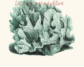 Vintage sea fan coral blue instant download printable art jpeg