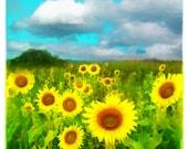 Sunflowers, 4x4, wall art, Clouds today, art, Fine art photograph, Sunflower photograph, gardeners gift, art, miniature art, clouds