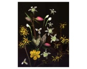 April Flowers Tapestry nature photograph - 11 x 14  yellow brown white pink dark background - GardenCapture