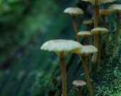 Mystical Magic Mushroom, Mycelium Forest Photography, Rustic Home Decor, Fairy Forest, Tiny New Beginnings, Childrens Forest Photography