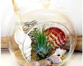 BEACH TERRARIUM KIT Hanging Air Plant, Tillandsia Glass Globe Terrarium, AirPlant Orb Housewarming Gift Thank You Gift Birthday Gift Hostess - AGiftofNature