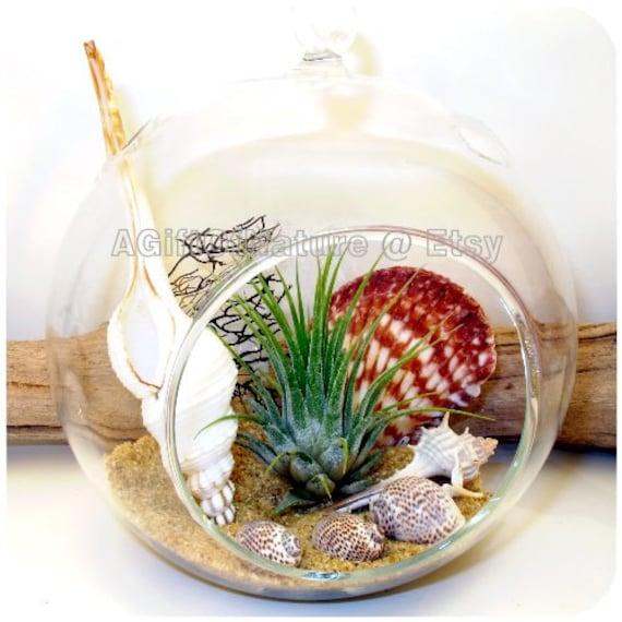 Items similar to nautical plant terrarium beach decor beach wall art beach wall decor - Decor plage ...