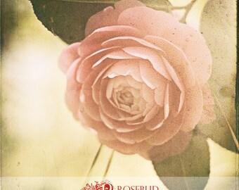 Camellia 5x5