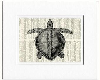 sea turtle dictionary page print