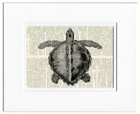 sea turtle dictionary page print