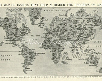Vintage World Map Insects 1930 original