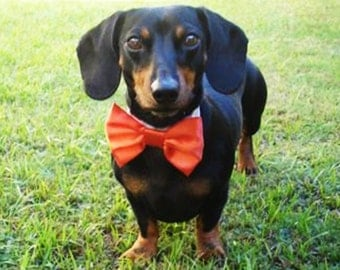 Formal Wedding Bow Tie Holiday: Dog or Cat Red Bow Tie and Collar