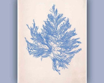 Sea Fan 3 in blue,  Vintage  image print, Blue Print,  Marine Wall Decor, Nautical art,  Collage  Print, Coastal Living, beach cottage