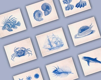 Set of 6 Prints, sea related theme. Seashells, Crab, Ammonite, Frigate, Sea star, Whale-shark, Sea lion fish, Nautical art