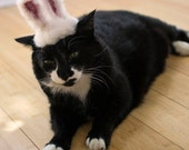 Easter Bunny Cat Hat