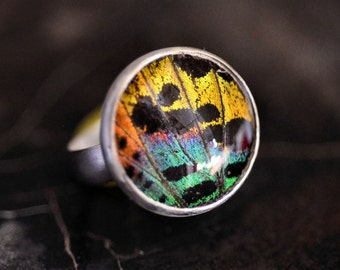 Sterling Silver Real Sunset Moth Wing Ring. Real Butterfly Wing Ring. Custom Made In Your Size. 18mm Ring.