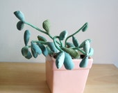 SALE Stuffed Jade Plant