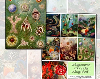 Vintage Microscopic Water Life Digital Collage Sheet eels coral single cell download