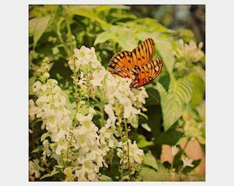 Butterfly Photograph, Floral Photo, Square Print, Orange Green Art, Garden Photo, Flower Garden Art, Butterfly Wall Art, Textured Photograph