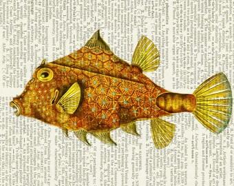 fish, magnificent print
