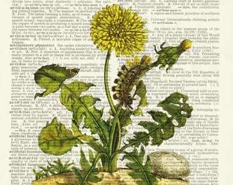 Dandelion dictionary page print