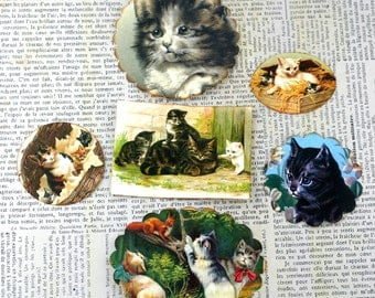 Cat Stickers Cute Variety