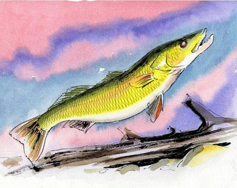 Original Walleye Analogous Fish Watercolor