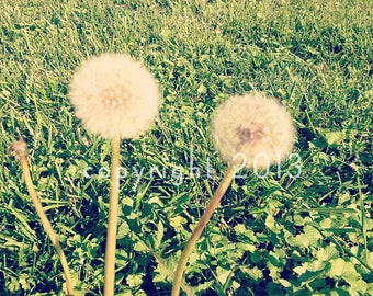 5x5 Fine Art Photograph - Make A Wish -  Instagram photo