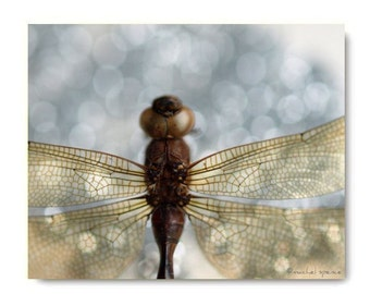 Dragonfly Photograph Print Affordable Art Nature Decor Woodland Forest Scene Water Insect  Odonata Epiprocta