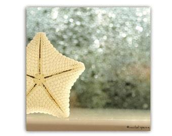 Seastar Natural History Print Starfish Photograph White Blue Natural History Bokeh White Seastar Beautiful Finds