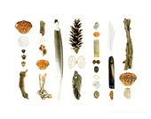 Beachcombing Series No.67, 8 x 10 photograph - crab shells, driftwood, and other flotsam found on the coast of Maine