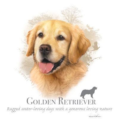 golden retriever hund stoff mit phrase auf bild auf einem 18. Black Bedroom Furniture Sets. Home Design Ideas