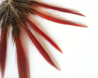 GOLDEN PHEASANT FEATHERS with red tips /  911 / Rollback