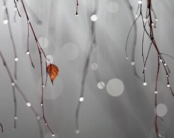 Big grey world punctured by a small orange leaf