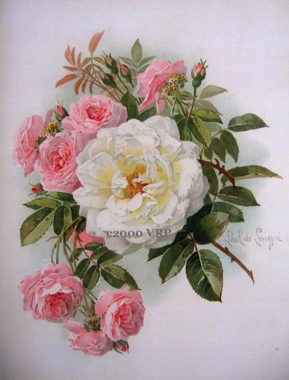Print Free Ship Victorian Morning Roses Paul De Longpre White
