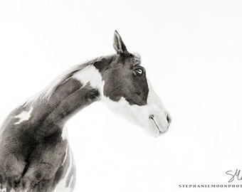 Horse Photography, Black and white Horse photography, fine art equine photography,