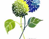 Blue and Green Hydrangea Print