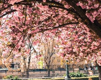 Paris Photography - Spring in Paris - Underneath the Cherry Blossoms - Pink Paris Wall Art, Cherry Blossom Paris Photo, Paris Decor