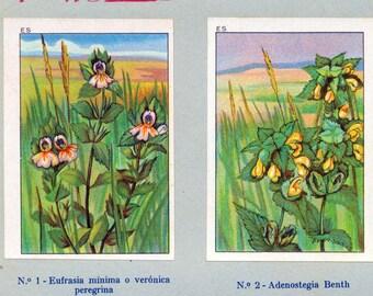 1932 Vintage Spanish Sheet of Illustrations on Parasitic Plants. Sheet 26