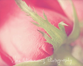 Rose Macro Photography Print