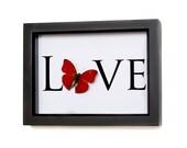 Real Framed Butterfly Design Love