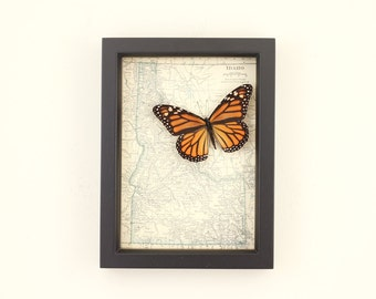 Framed Map of Idaho with native butterfly