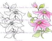 Digistamp Instant Download. Clematis  Digital stamp and coloured stamp - Digi Stamp - floral - art for cards and crafts