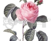 French Pink Rose Printable Digital Image: Commercial Use - Image No. R70 Istant Download