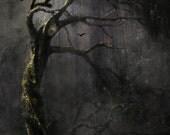 Tree of Lasting Sorrow - Large Format Giclee  -Lisa Snellings