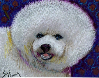 original art aceo drawing dog Bichon Frise Non Sporting Group