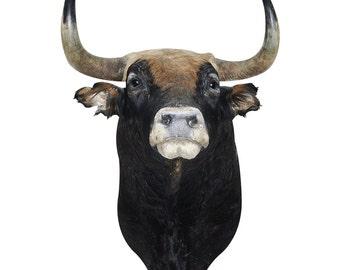 Spanish Fighting Bull Wall Decals