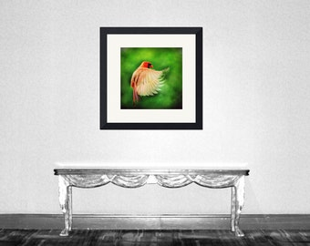 Cardinal Fly - Original Male Cardinal Flying bird Cardinal flying Flying with me Cardinal in flight Flying to you Fly Fine Art Print 5x5