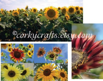 Mixed variety sunflower seeds - teaching gift, send a smile for their garden