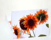 Sunflower Note Cards titled Back to Back -- 12 cards and 12 envelopes presented in a clear box