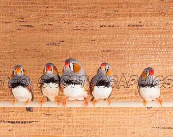 Portrait of Five Zebra Finches, Photography