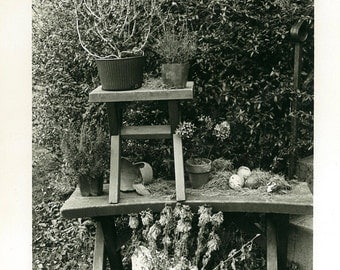 Dead Plants Still Life 8x10 Photograph